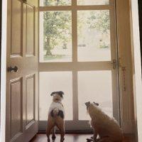 Canine Sympathy