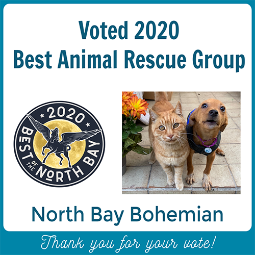 Voted 2020 Dog Rescue