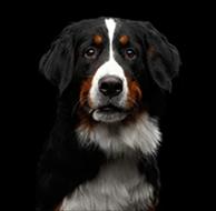 Dog Rescue in Santa Rosa California