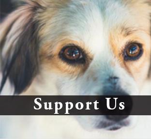 Dog Adoption in Santa Rosa CA.