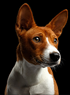 Dog Rescue in Sonoma County